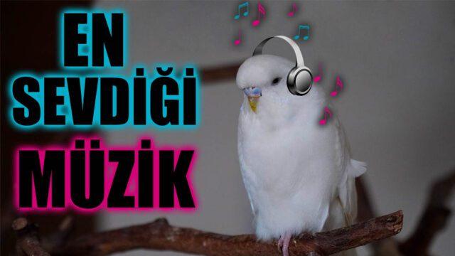 Muhabbet Kuşu Müzik Dinler mi Sevdiği şarkılar