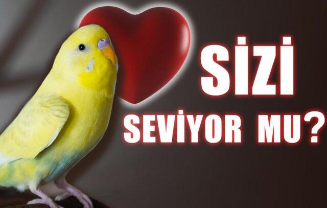 muhabbet kuşunuz sizi seviyor mu